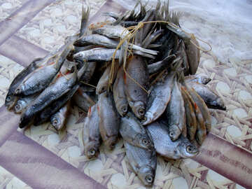 Dried  fish №9816