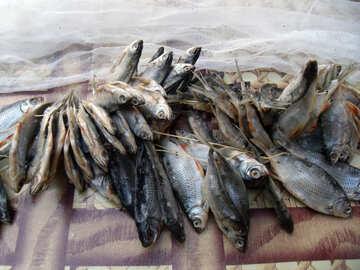 Saline  fish №9818