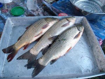 Drei  Fische №9271
