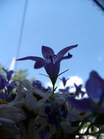 Flower  bell №9752