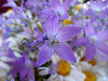 Wild  flowers. №9800