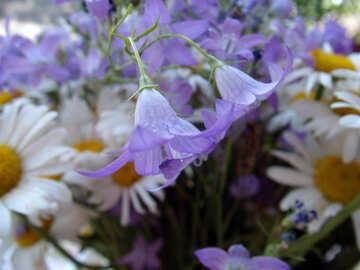 Simple  flowers. №9736