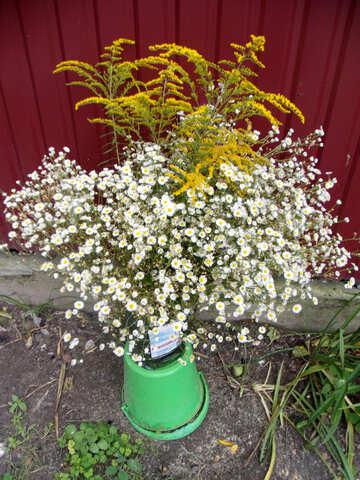 Wild  flowers. №9775