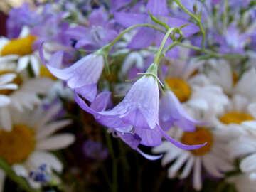 Field  flowers. №9747