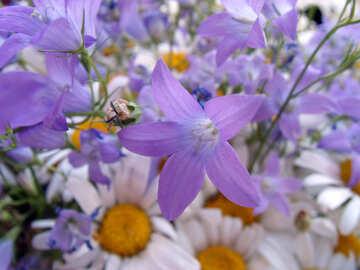 Garten  Blumen. №9751