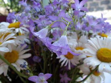 Garden  flowers. №9791