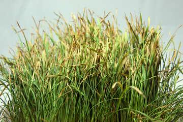 Dry  grass №9188