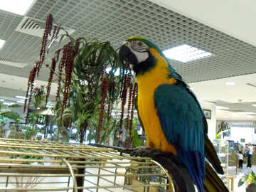 Parrot  macaw  on  cage №9463