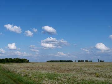Meadow №9598