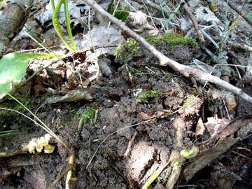 Moss №9633