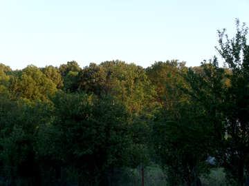 Trees  at  slope №9593