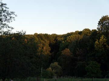 Wood  at  slope №9589