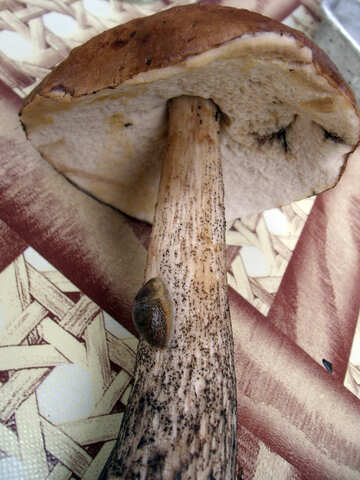 Mushroom  №9404
