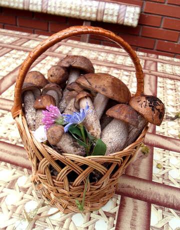 Mushroom  Cart №9443
