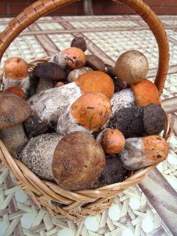 Edible  mushrooms №9451