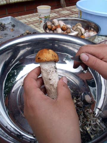 Mushrooms   aspen №9440