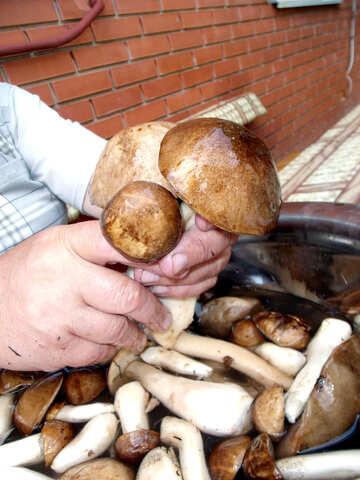 Cart  mushrooms №9415