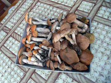 Mushrooms №9408