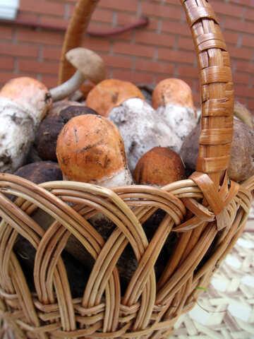 Mushrooms   cart №9426
