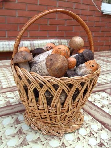 Delicious  mushrooms №9394