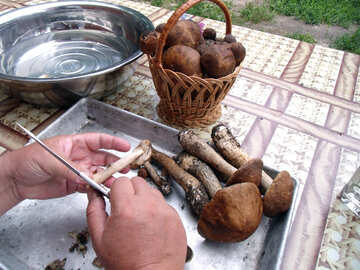 Food    mushrooms №9386