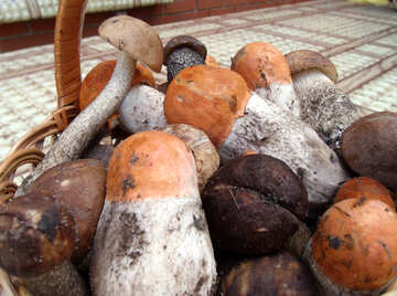 Mushrooms    Forest №9418