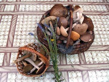 Mushrooms    table №9384