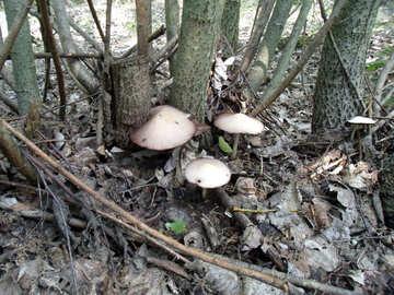 Mushrooms №9653