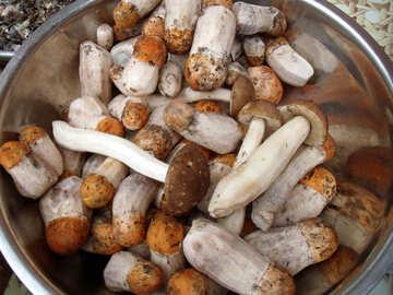 Mushrooms №9414