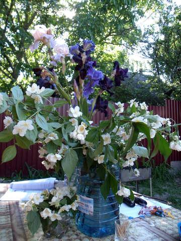 Blooming  jasmine  and  iris №9805
