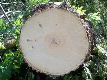 Cut down  tree №9610