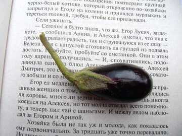 Small  eggplant №9219