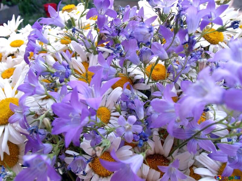 Blumenstrauß.  Gänseblümchen  und  Bell №9802