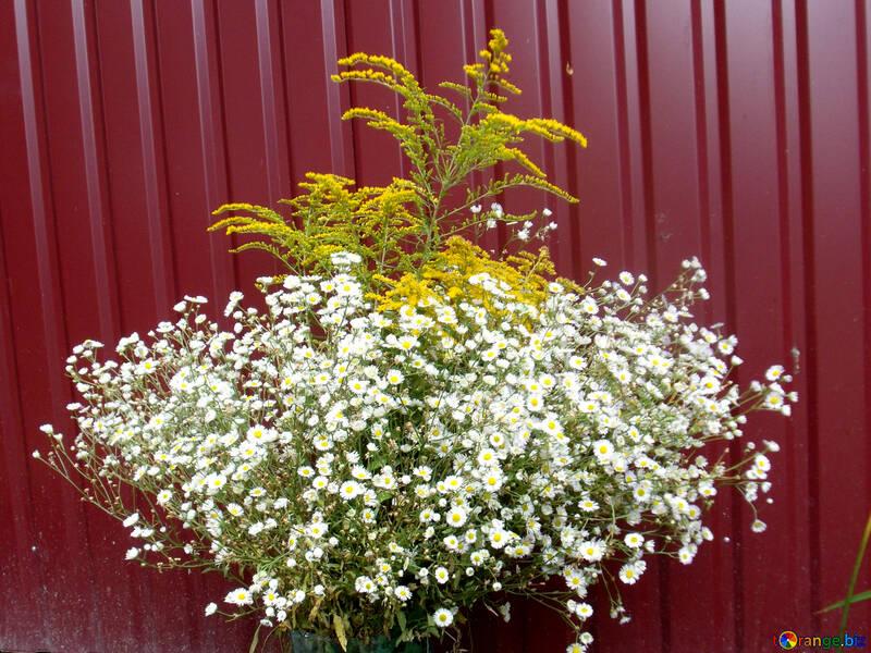 Feld  Blumen.  Blumenstrauß. №9789