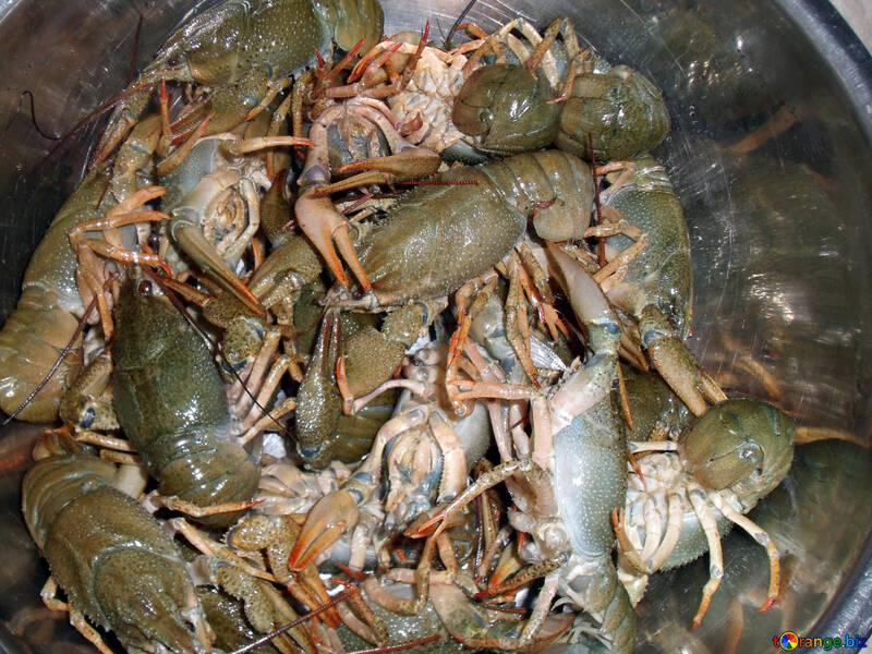 Crayfish  №9963
