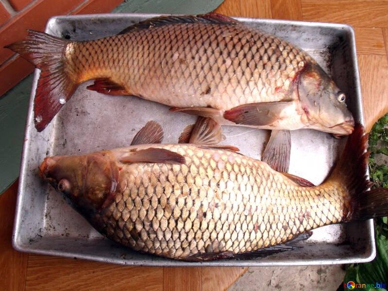 Pisces №9272