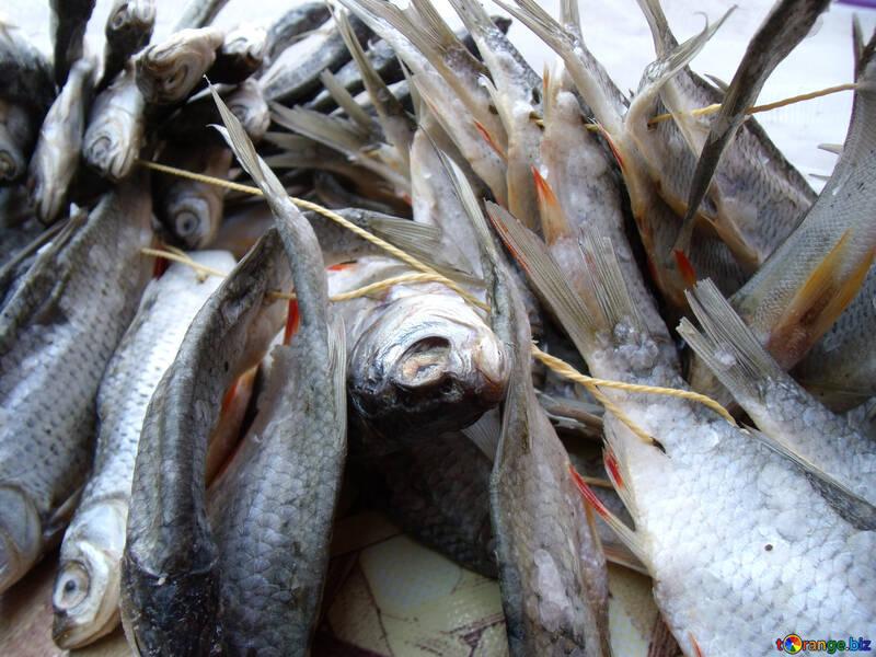Gesalzen     Fische №9813