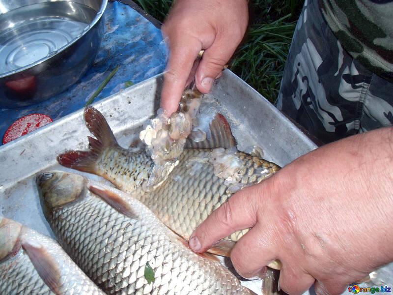 Руки. Рыба. Чистка. Нож. №9277