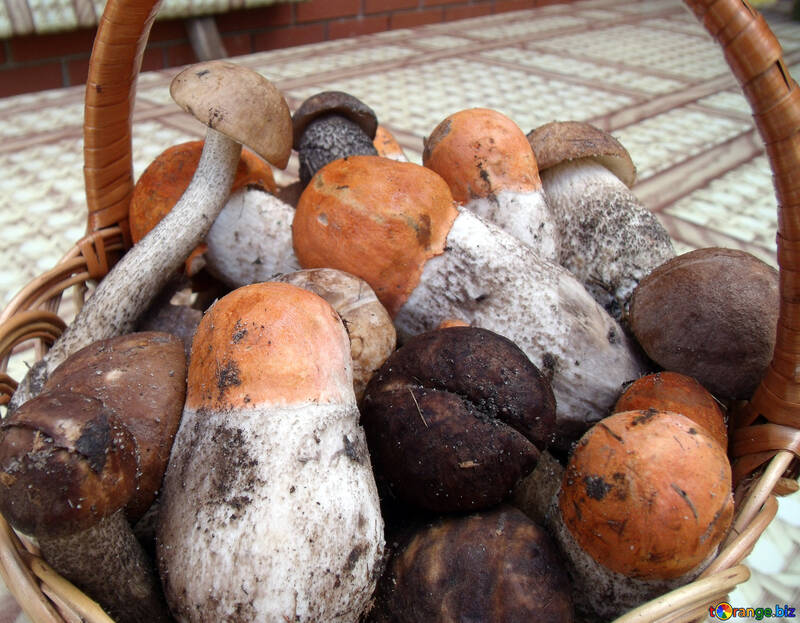 Mushrooms    Forest №9445