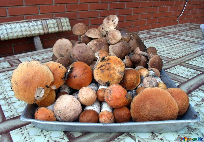 Сбор грибов №9385