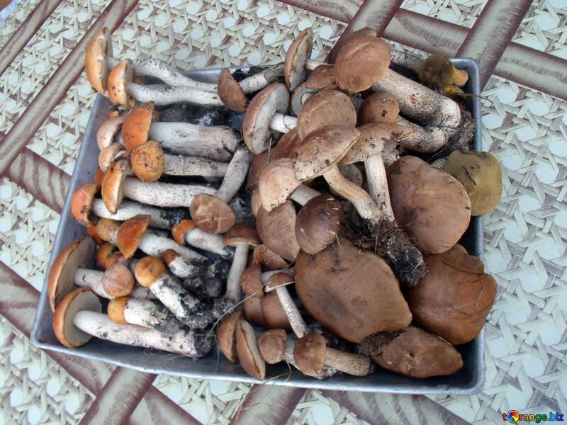 Разные грибы №9419