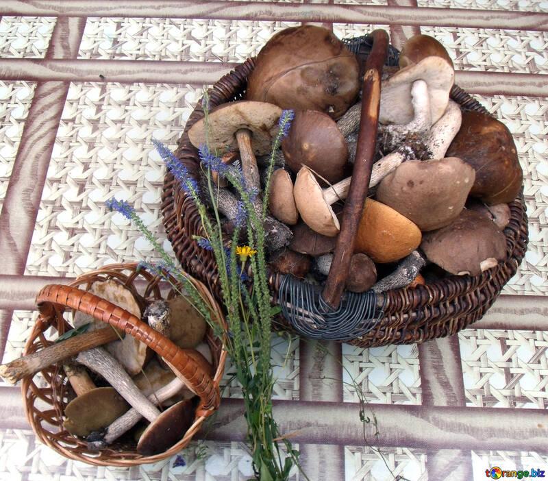 Урожай грибов №9391