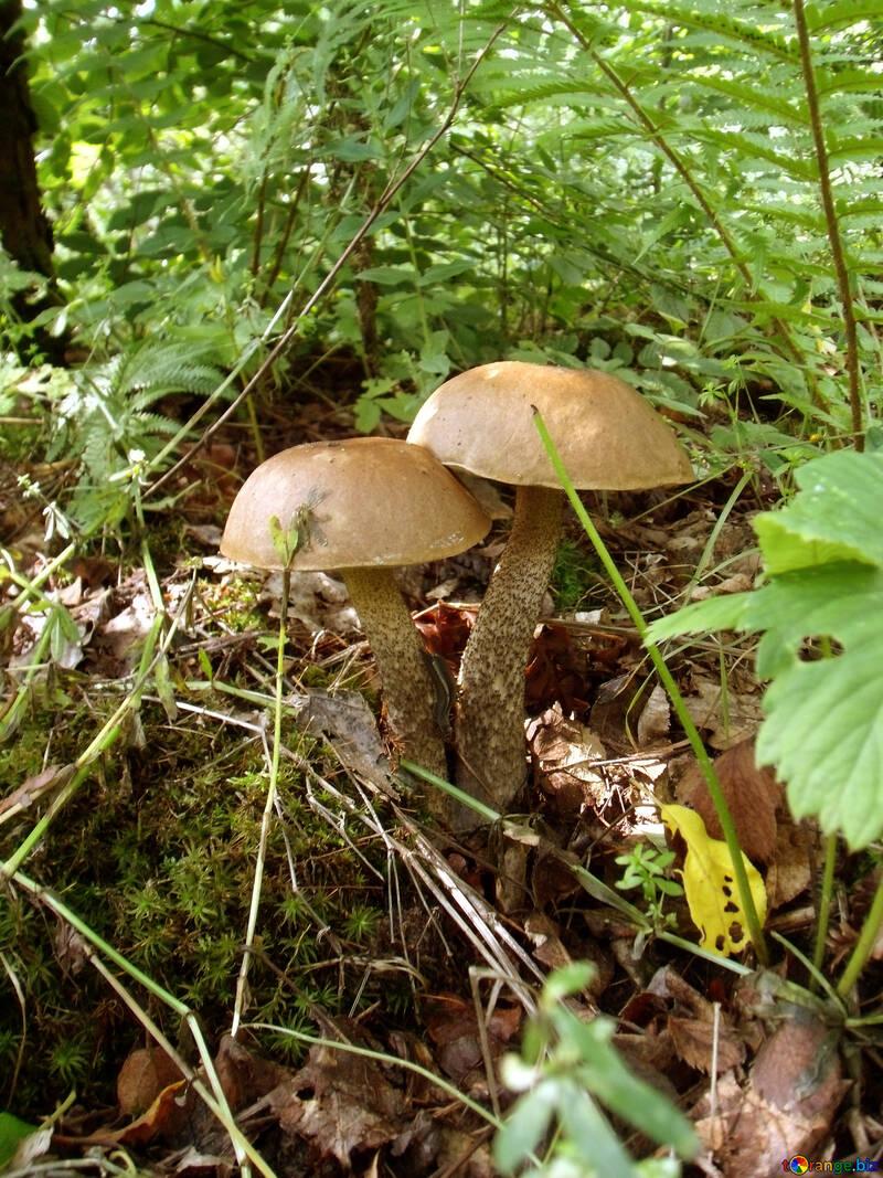 Wallpaper   desktop    Mushrooms   №9434