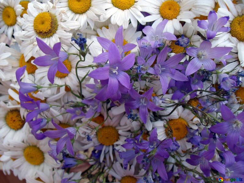 Spring  flowers. №9798