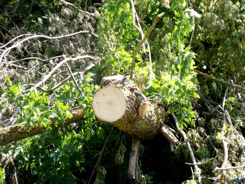 Cutting  trees №9588