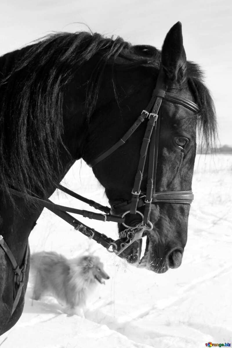 Monochrome. Winter portrait of horse. №12232