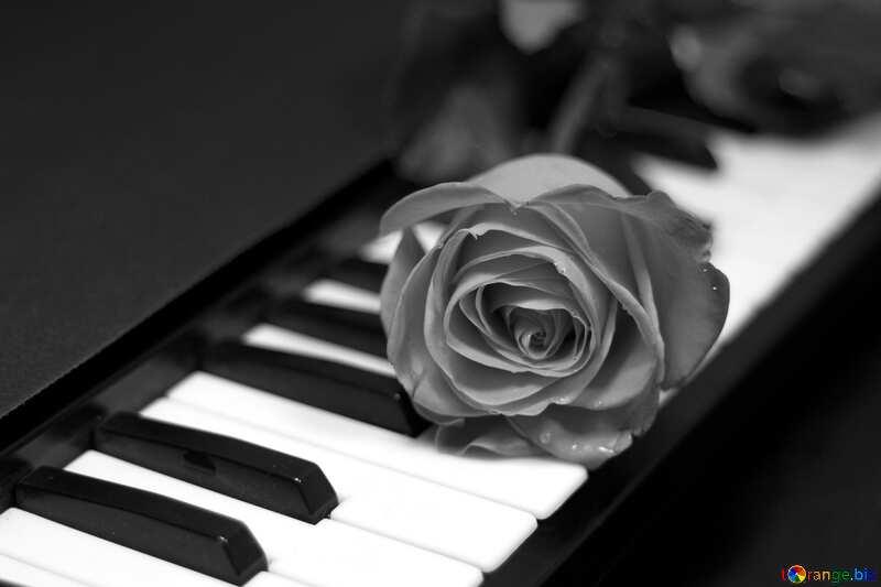 Monochrome. Rosa  at  keys  piano. №7198
