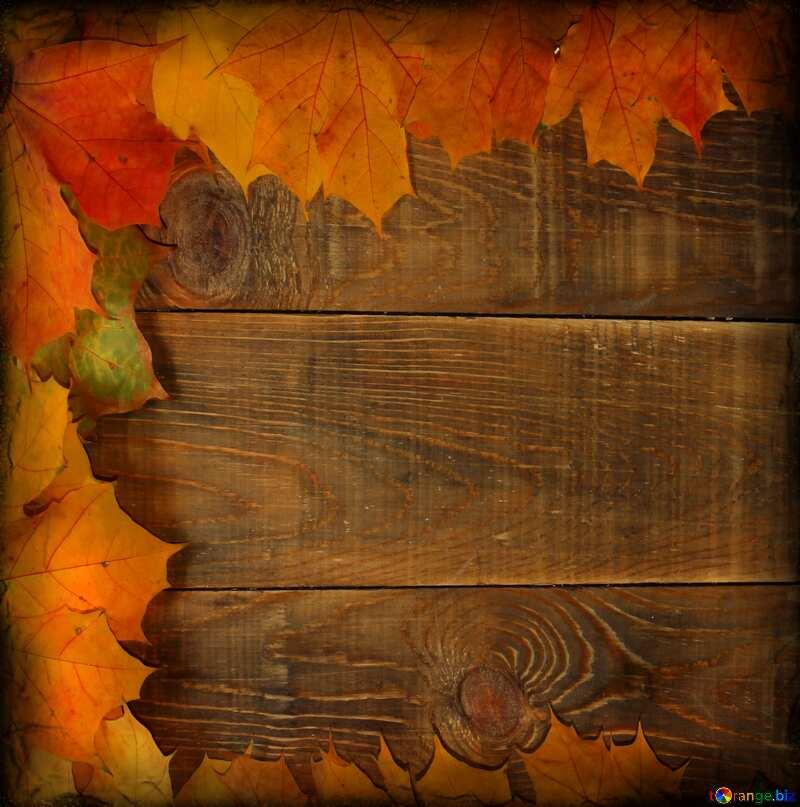 Background blank cards for autumn leaves dark frame №35237