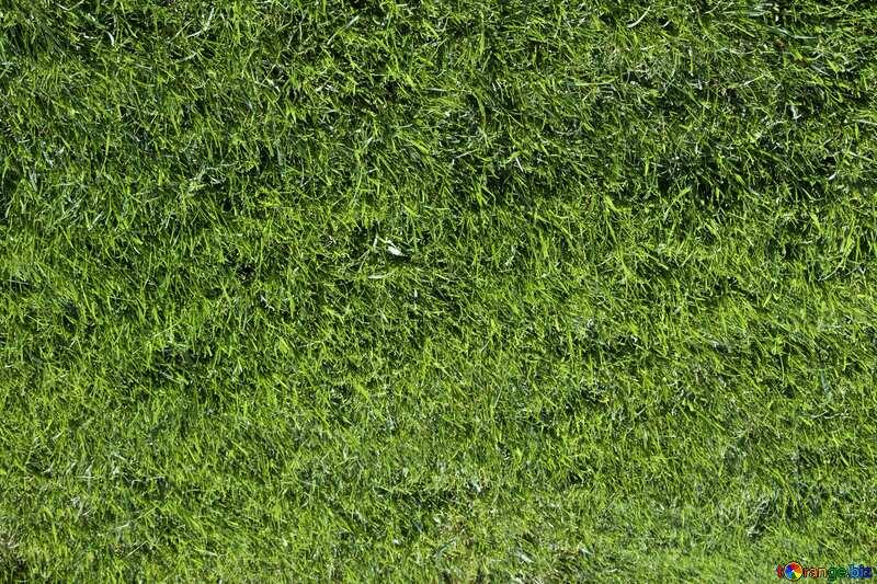 Lawn №5710