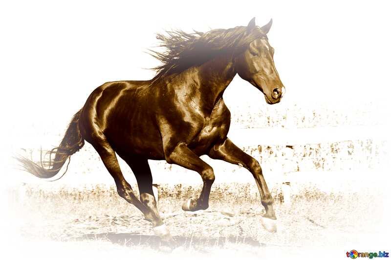 Monochrome. Horse. №36664